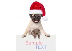 可爱宠物与广告牌
