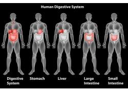 透视人体器官