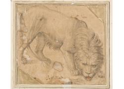 低头的狮子绘画