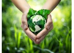 捧着的地球和绿叶
