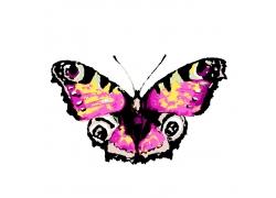 卡通蝴蝶水彩画