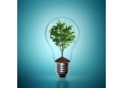 电灯里的大树