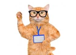 戴工作证的猫咪