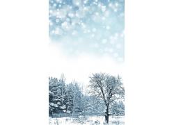 冬天白雪树木素材图