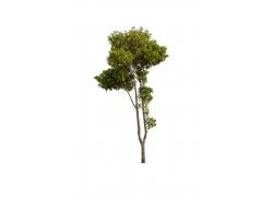 树木素材图