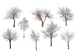 干枯树木素材图