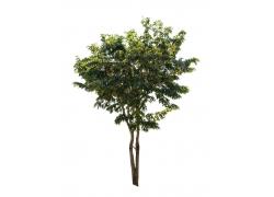 绿叶树木素材图