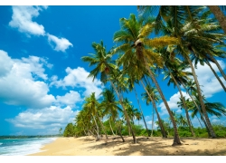 海边成排的椰树图片