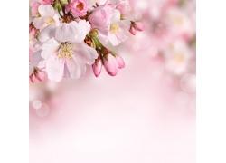 光斑与桃花