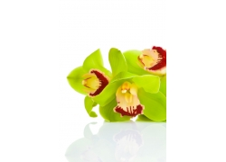 绿色兰花摄影