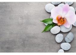 能量石与兰花