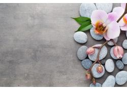 鹅卵石和兰花
