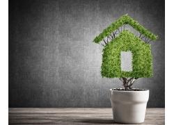 创意花盘与绿色房子