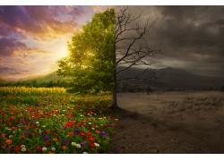 鲜花草地与荒漠对比