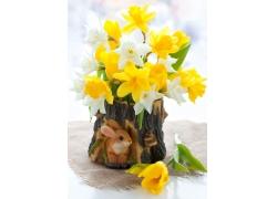 兔子树桩水仙花