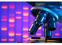 高清显微镜摄影