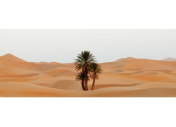 沙漠上的树木植物