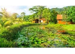 河塘里的荷花与房屋