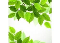 矢量绿叶背景设计