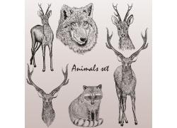 动物素描插画图片