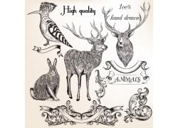 欧式花纹与动物插画图片