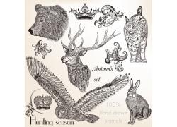 雄鹰与野生动物插画图片