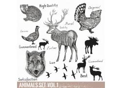 动物插画与动物剪影图片