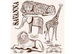 非洲野生动物插画图片