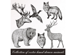 野生动物插图图片