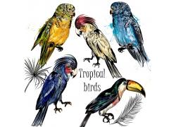 水彩鸟类插画图片
