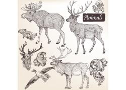 素描动物插图图片