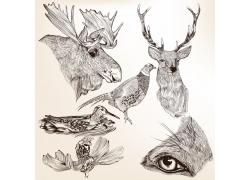 鹿与鸟类插画图片