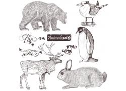 企鹅与哺乳动物插画图片