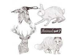 野鸭与哺乳动物插画图片