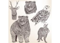 各种野生动物插图图片