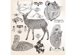 动物素描插图图片