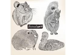 各种动物素描插图图片