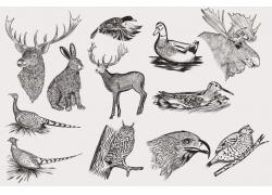 鸟类与陆地动物插画图片