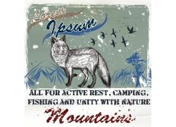 狐狸动物插图图片