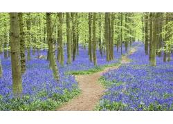 树林薰衣草风景