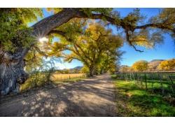 田园公路树木风景