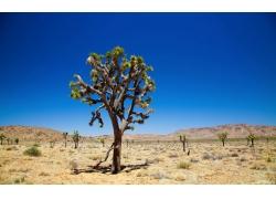 美丽沙漠树木风景