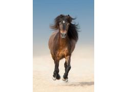 一匹棕色的马