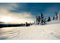 冬季雪景与树林