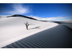 沙漠里的大树