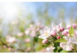 阳光光斑桃花