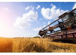 稻田收割机