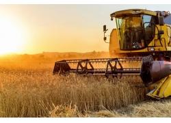 稻田里的大型收割机