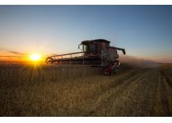 日出收割机稻子