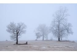 冬天树木雪景